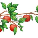 Apple Trees Drawing Clipart Best