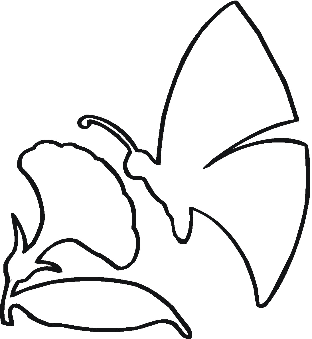 Flower Drawing Outline