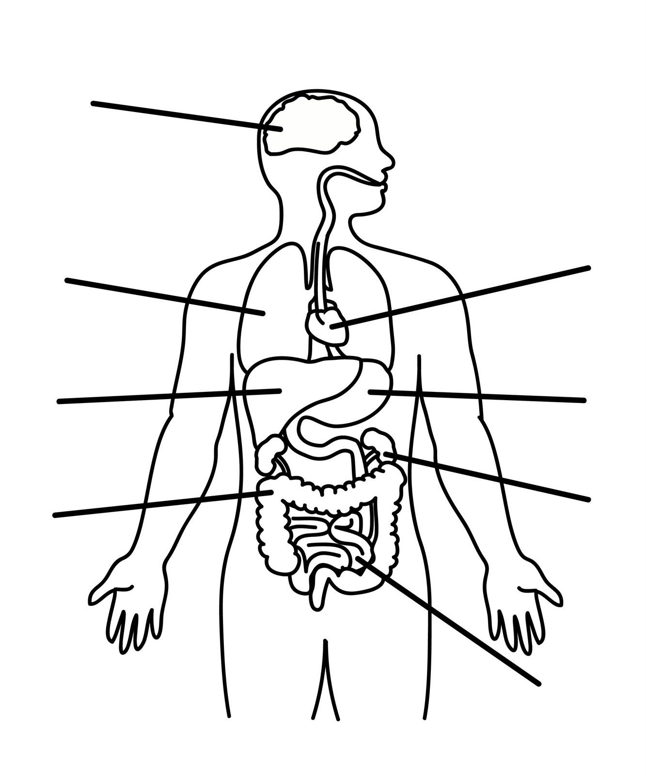 Body Outline Back