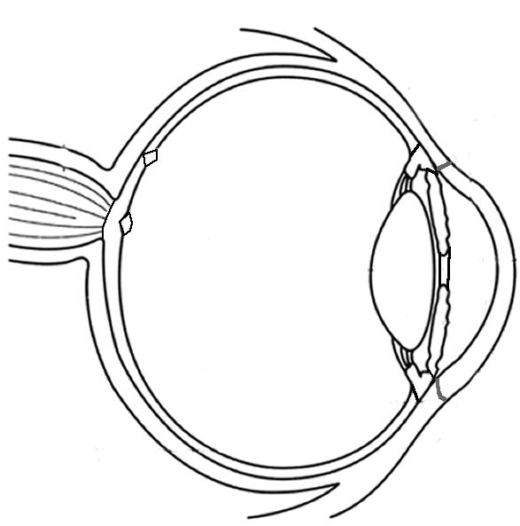 No Simple Labels Eye Diagrams