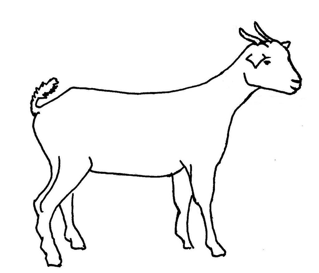 Line Drawing Of A Goat