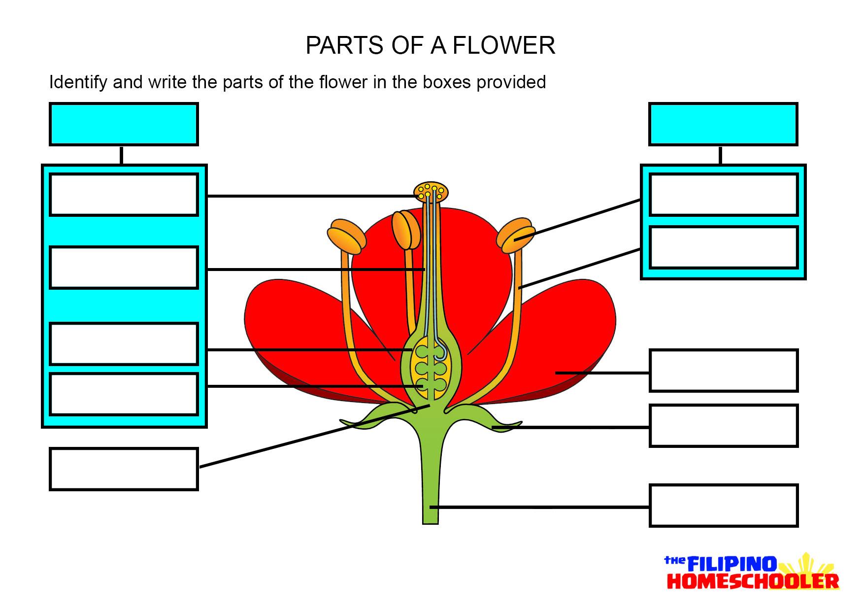 Label A Flower Worksheet