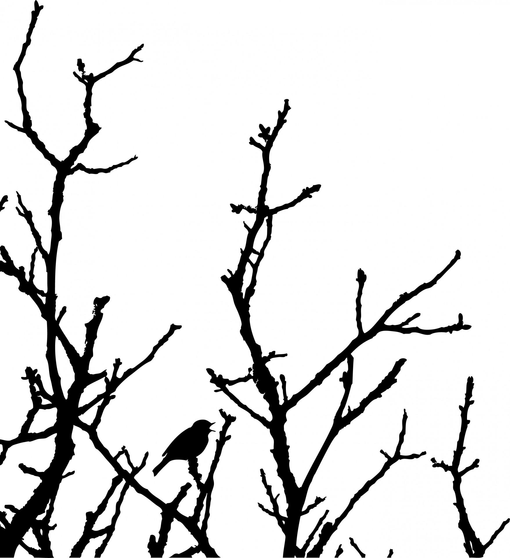 Bird On Tree Art