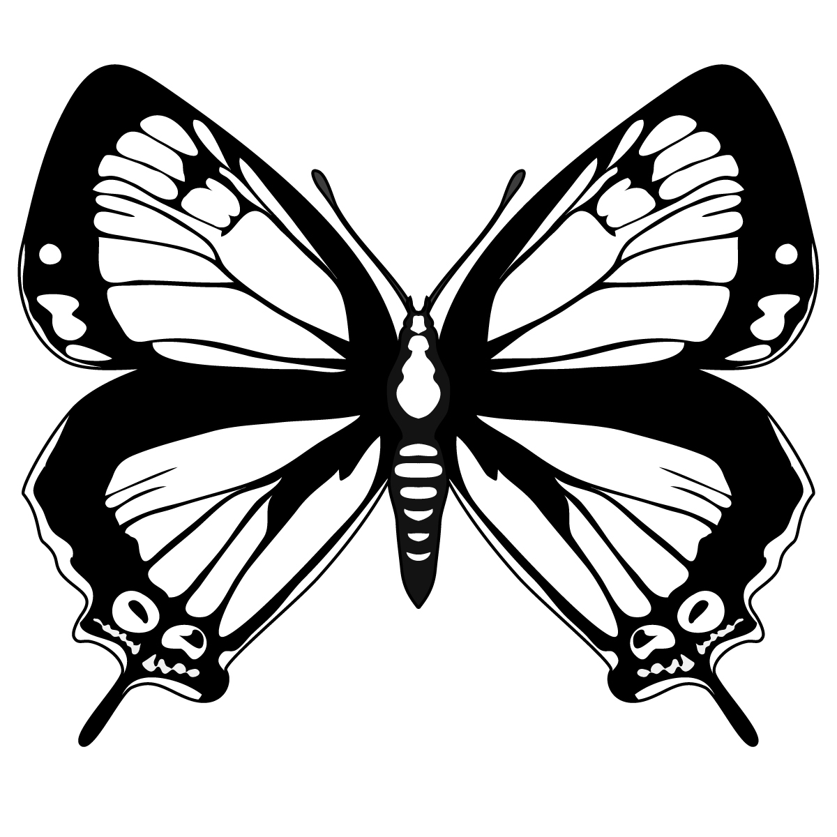 Butterfly Outline Images