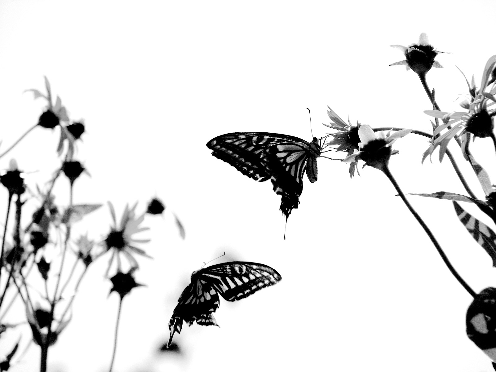 Cartoon Black And White Butterfly