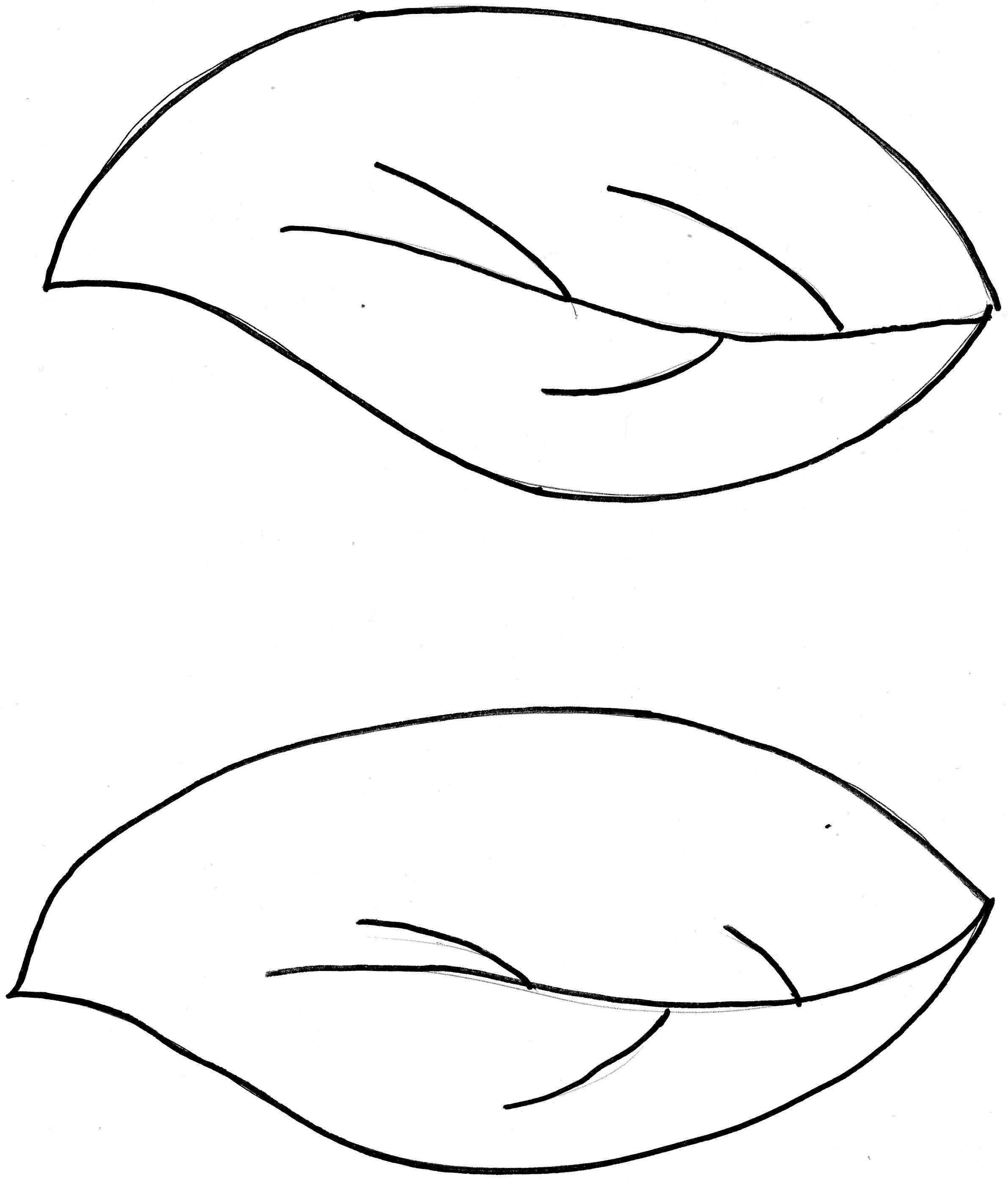 Leaf Outline Template