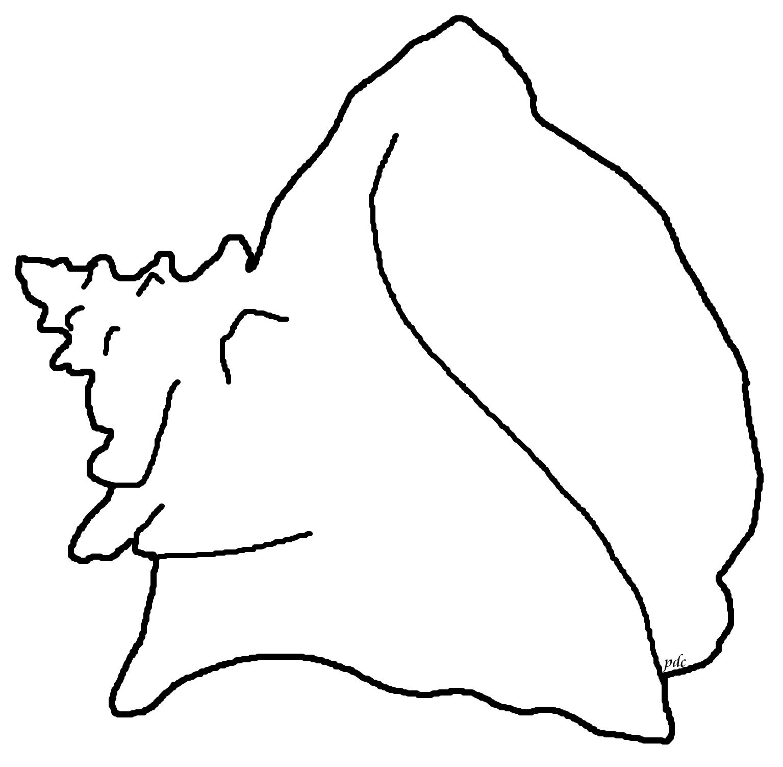 Seashell Template