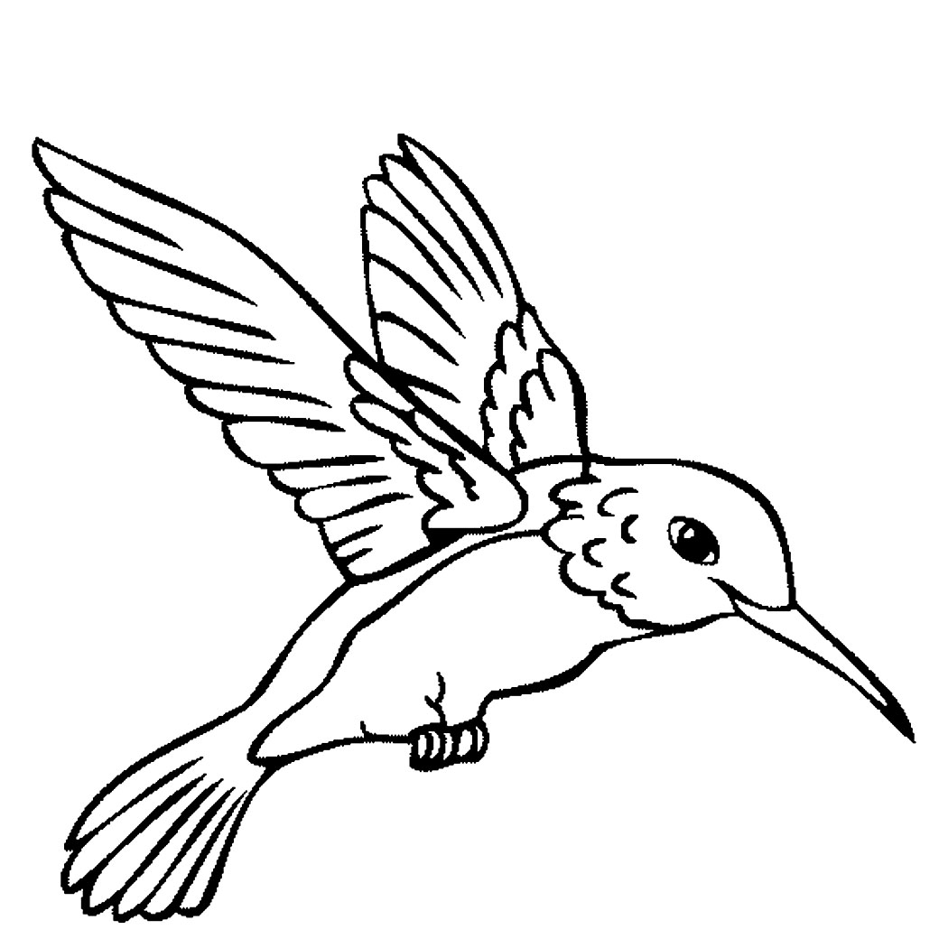 Hummingbird Drawings