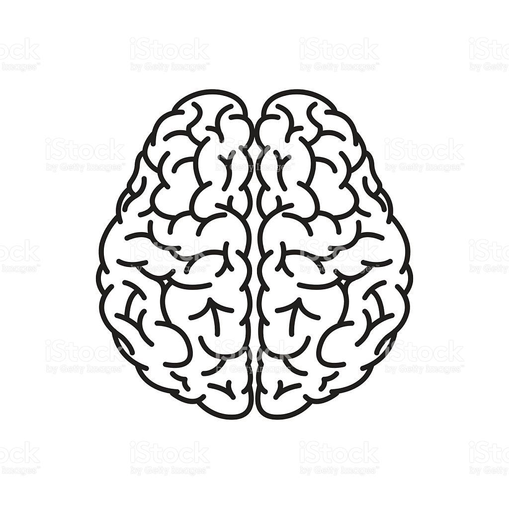 Human Head Outline Brain