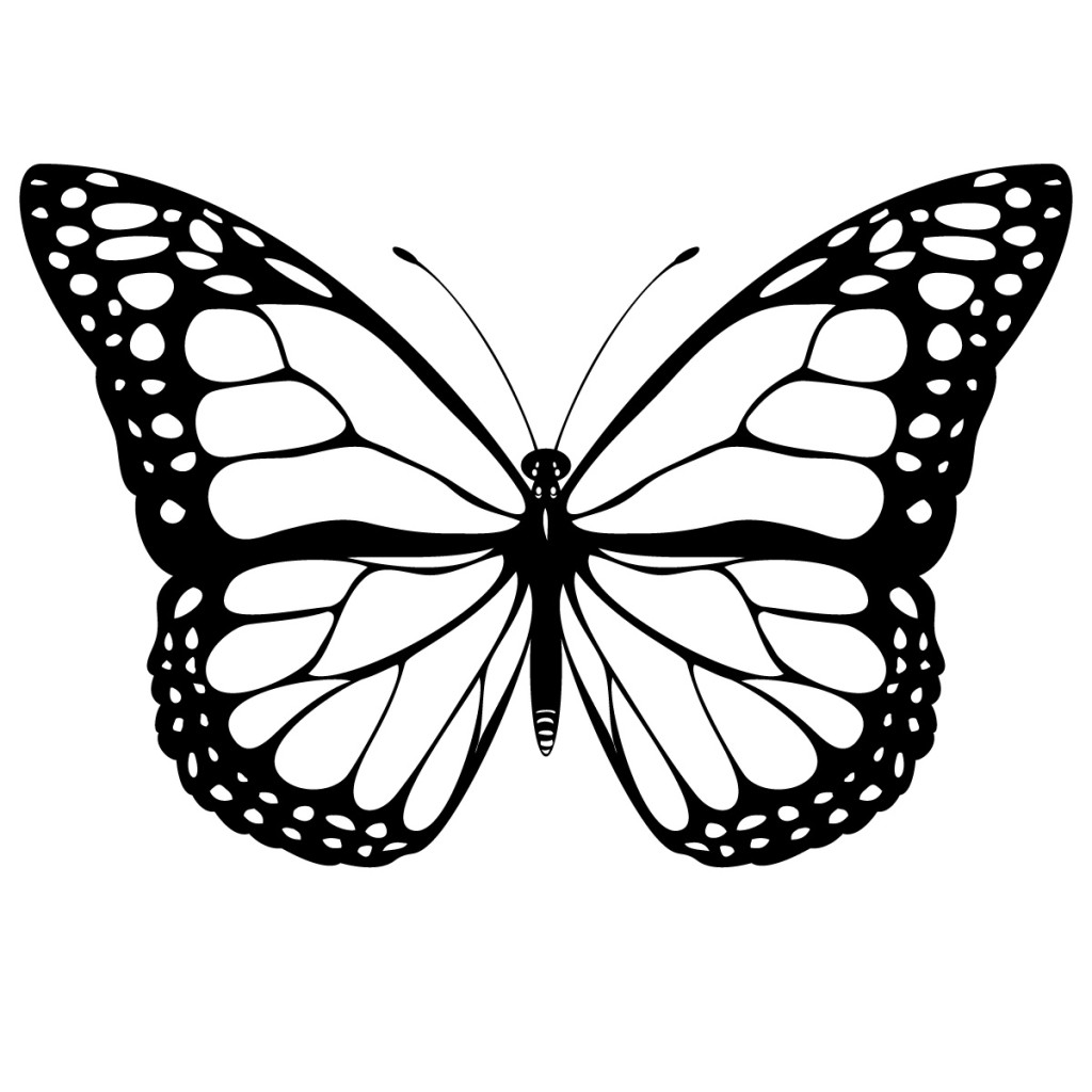 Butterfly Images In Black And White