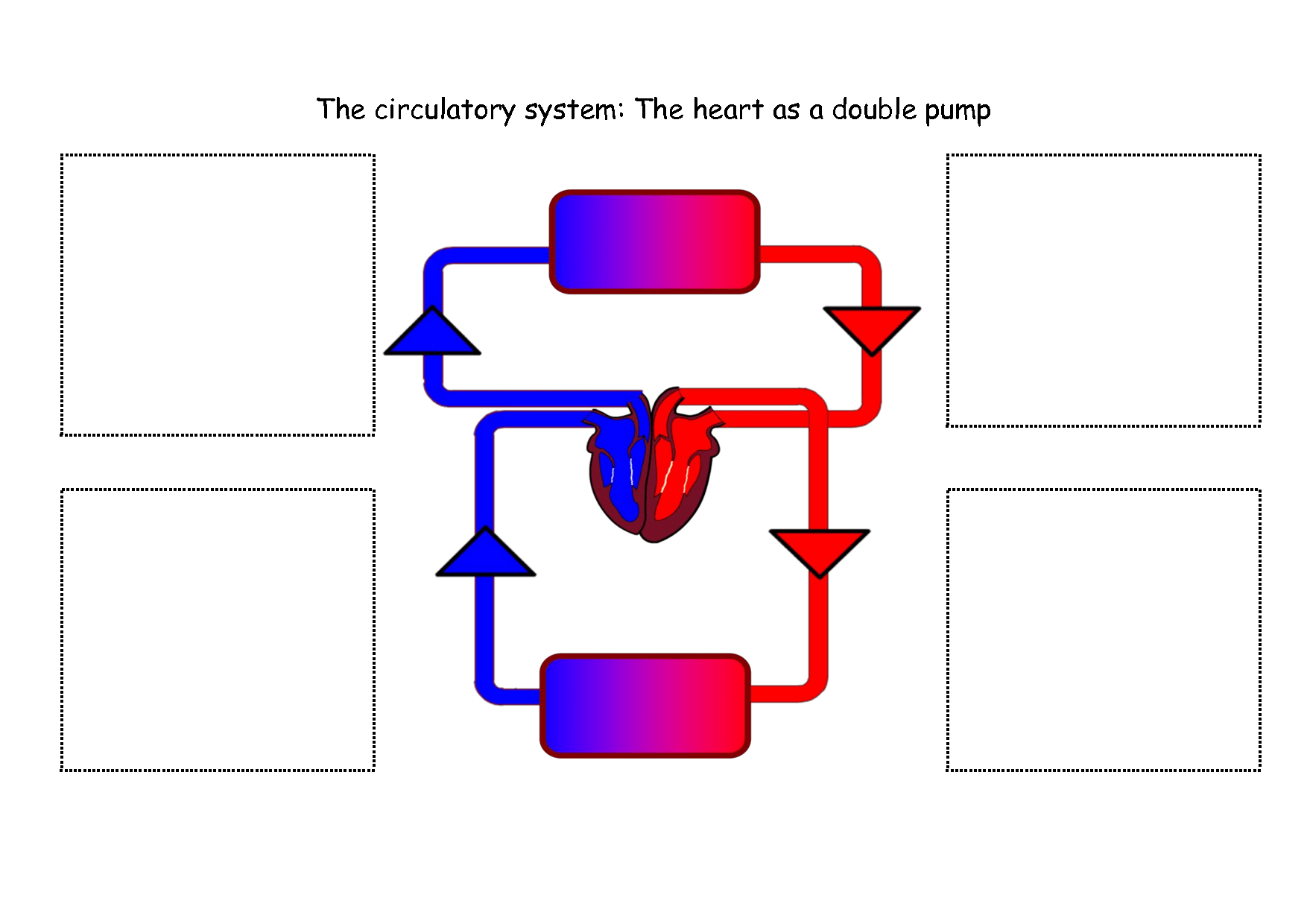 Respiratory System Diagram For Kids To Label