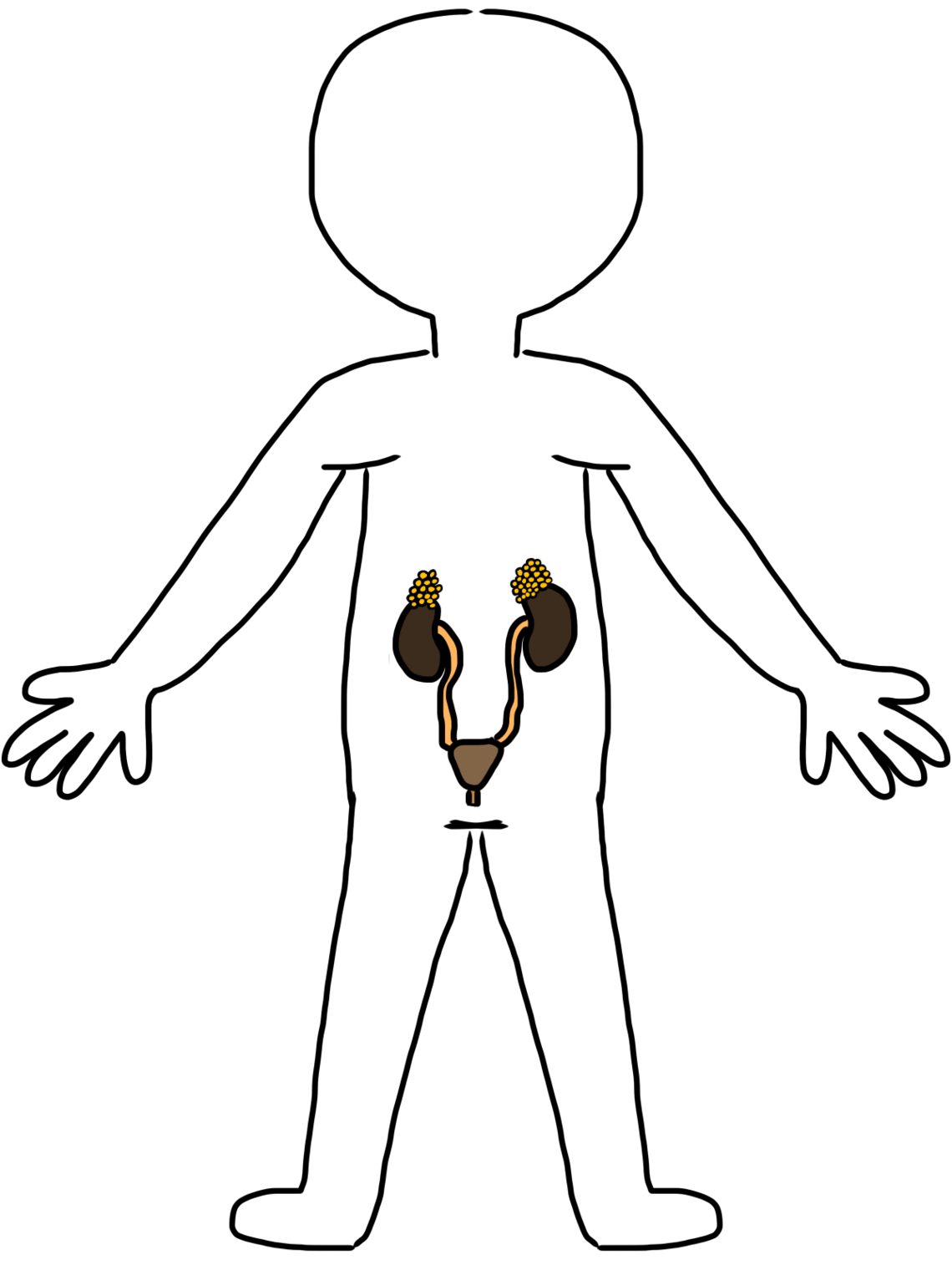 Body Systems Clipart