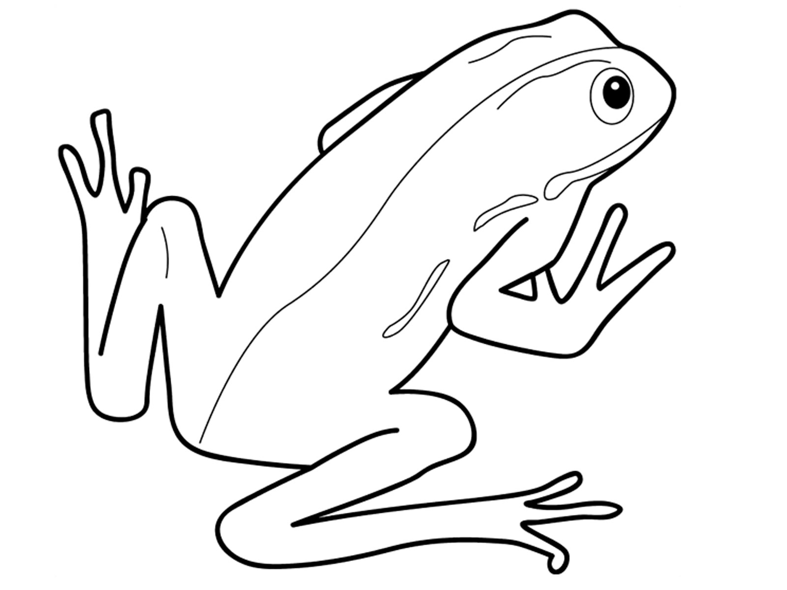 Amphibious Reptile Colouring Pages Page 2