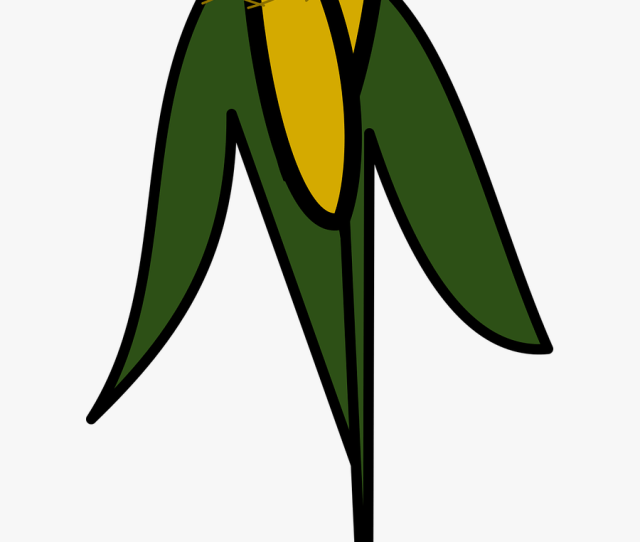 Icon Corn Orchard Free Photo Gambar Icon Pohon Jagung Free
