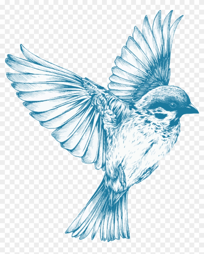 Clipart Blue Bird Flying Drawing Free Transparent Png Clipart Images Download