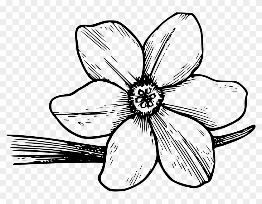Shining Design Flower Coloring Pages Free Printable Violet Flower Coloring Page Free Transparent Png Clipart Images Download