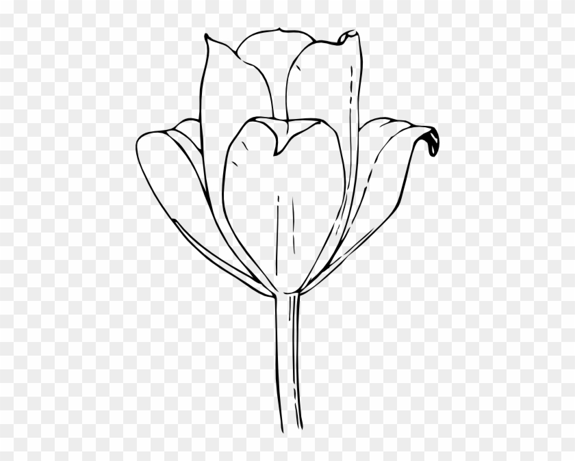 Tulip Flower Clip Art Free Vector 4vector Tulips Coloring Pages Free Transparent Png Clipart Images Download