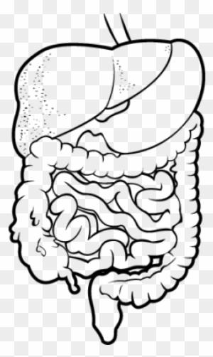 Para Dibujar El Sistema Digestivo Find Gallery