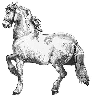 Free Percheron Clipart 1 page of Public Domain Clip Art