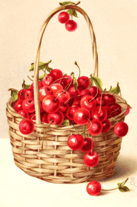 Basket of Cherries Clipart