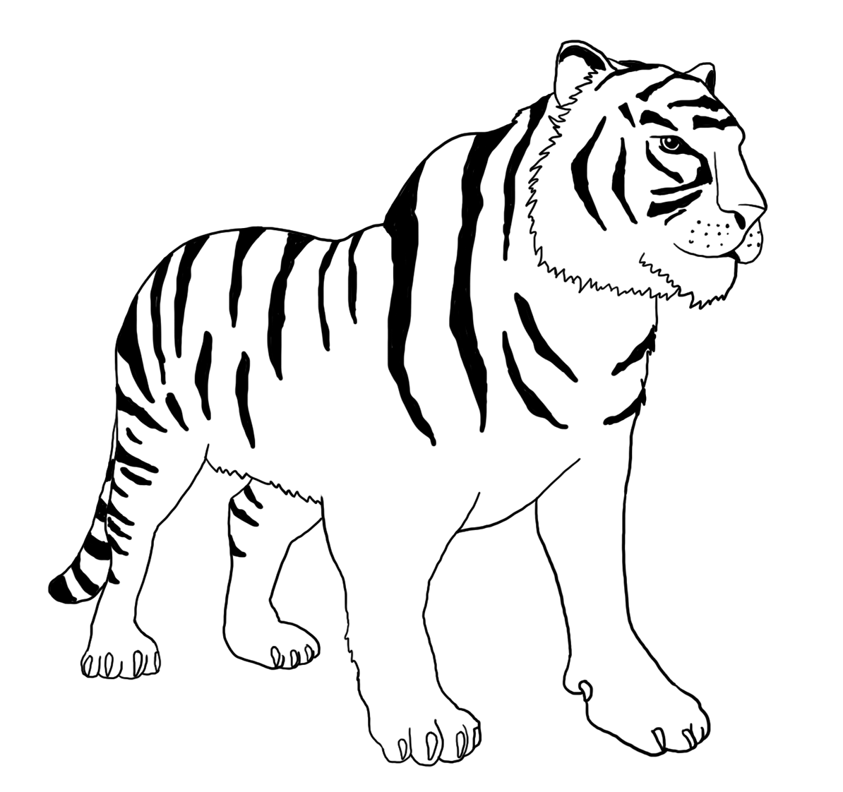 Bengal Tiger Clipart | Wiring Diagram Database