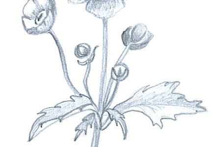 Pencil Sketches Of Flowers Flower Shop Near Me Flower Shop