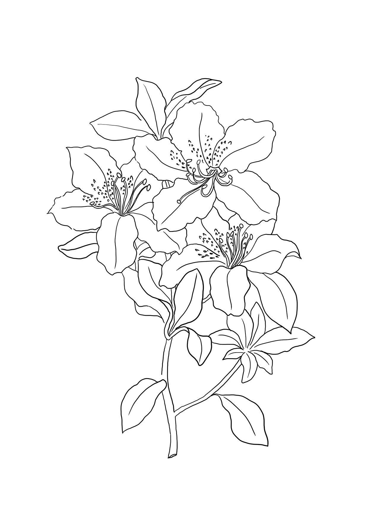 Lilies Coloring Page And Banner Coloring Pages