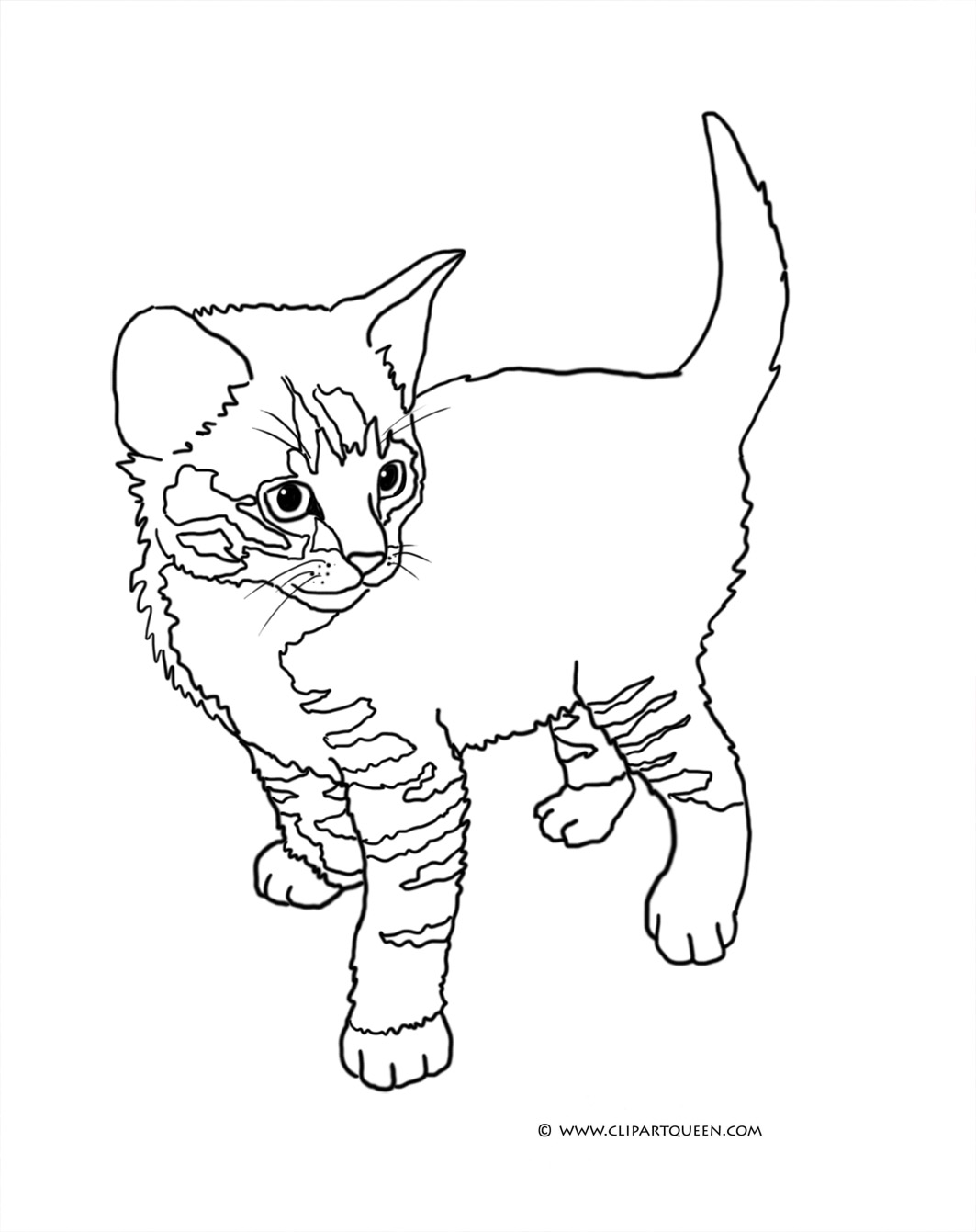 Tabby Cat Coloring Sheets