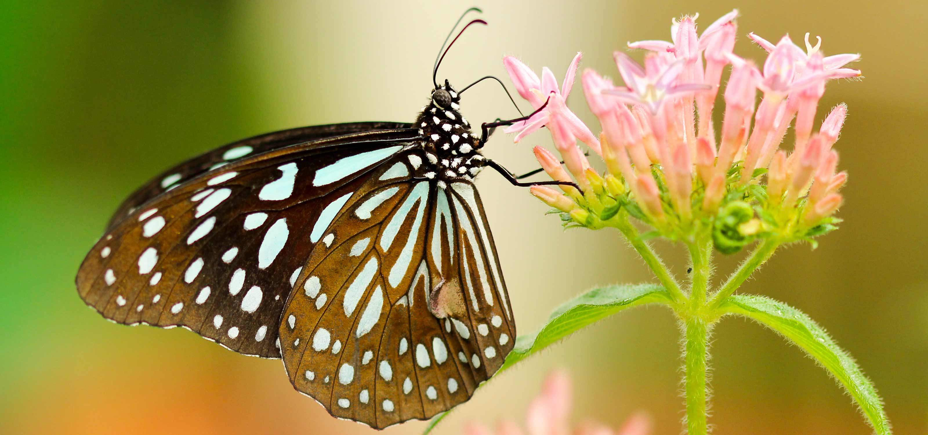 Butchart Gardens Amp Butterfly Gardens Package From Seattle