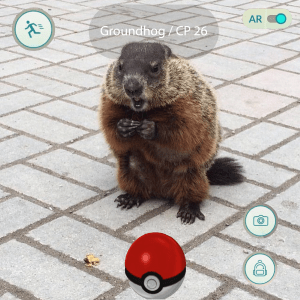 A beaver appears with the Pokemon GO screen