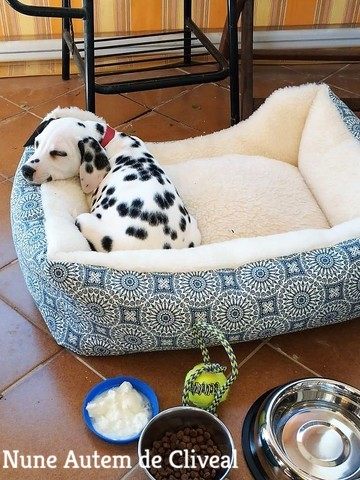 cachorro dalmata agua dulce almeria