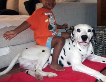 cachorro-dalmata-jugando-con-niño-pepo