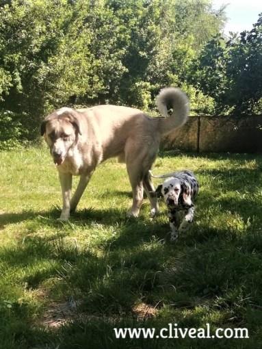 cachorro dalmata pais vasco