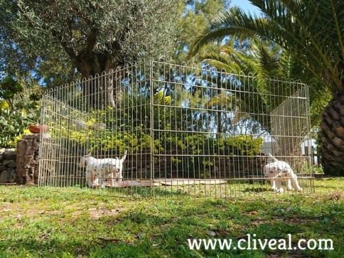 dalmatas cachorros en el jardin