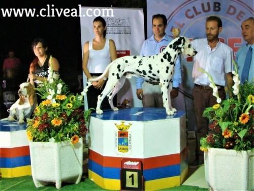 perro raza dalmata campeón de andalucia