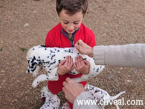 vacunación cachorro