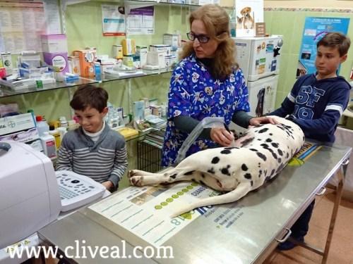 veterinaria con niños