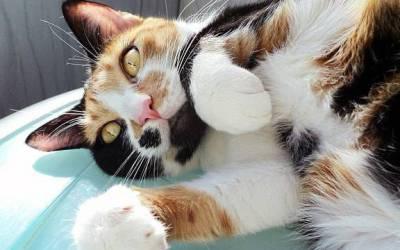 La sterilizzazione del gatto