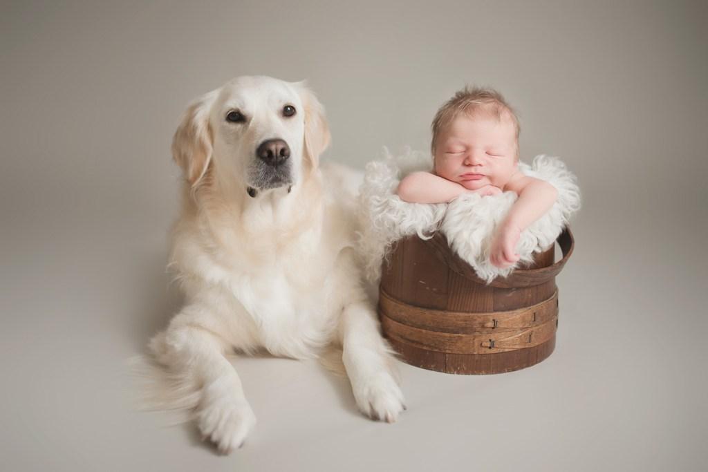 The Babymoon Photographer, newborn photo shoot with dog, dallas newborn photographer, newborn photo shoot, CLJ Photography