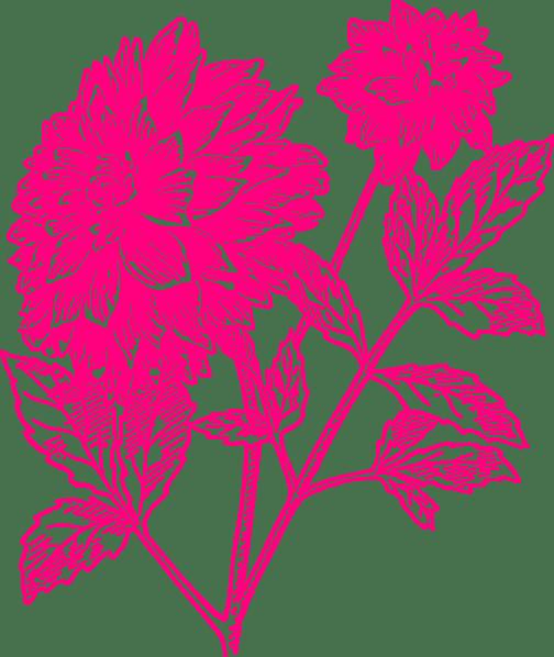 Carnation Clip Flower Pink Art