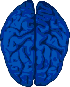 Blue Brain Clip Art