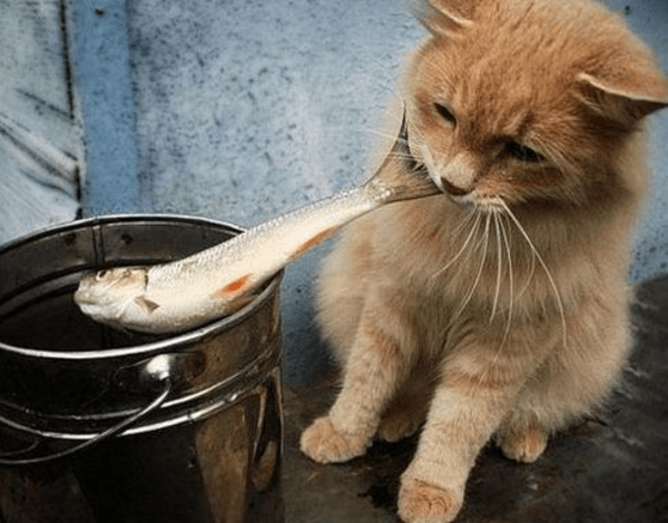 Image result for cats with fish
