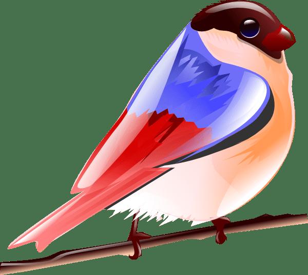 Colorful Bird Clip Art At Vector Clip Art