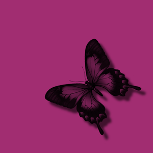 Pink Butterfly Black Glitter Free Images At Clker Com