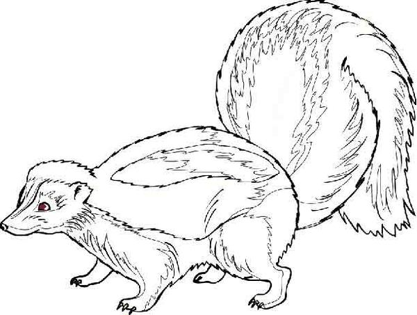 Skunk Free Images At Vector Clip Art Online