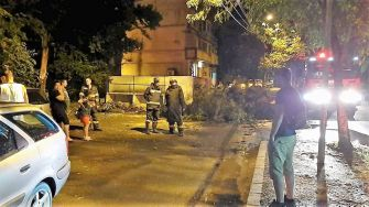 Copaci doborâți de vânt în municipiul Călărași. FOTO Primăria Călărași