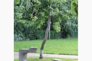 tree3_jpg_size_xxlarge_letterbox