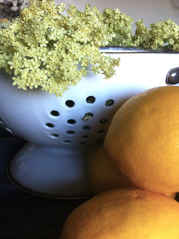 Wild elderflowers and meyer lemons from Loreen's Santa Cruz garden