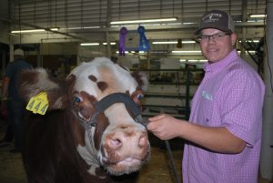 Photos by Valerie Shelton Zach Buckley, a senior at Clovis East, with his champion colored steer Skittles. Buckley took first place in senior showmanship as well.
