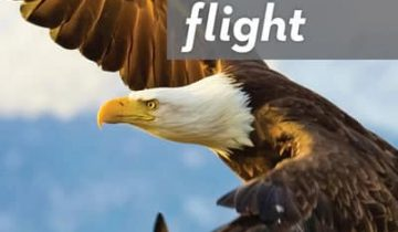 Flight, the genius of birds DVD